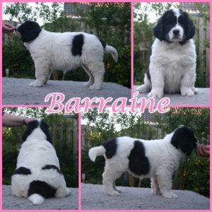 Barraine