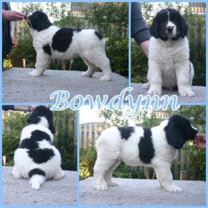Bowdynn